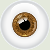eyebrown_sm