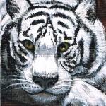 23. Tiger